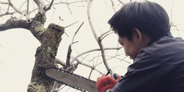 樹木の伐採をご依頼希望の方