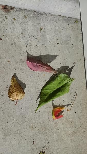 秋色発見!