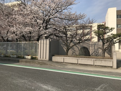 水槽も桜🌸も、、、