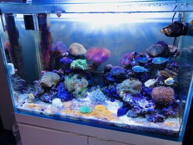サンゴ水槽メンテナンス