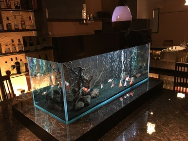 金魚水槽ϵ( 'Θ' )϶
