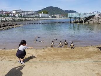 ペンギン水族館に行ってきました。