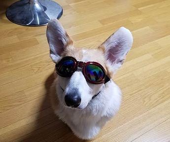 犬用サングラス