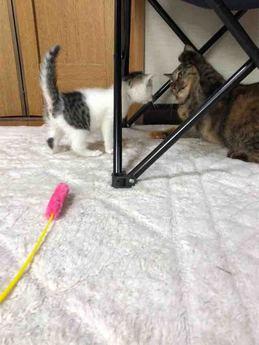 子猫vsれんこん