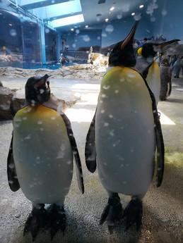 ペンギン水族館🐧