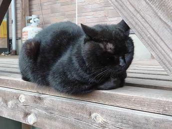 西海橋の猫
