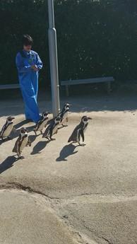 ペンギン水族館