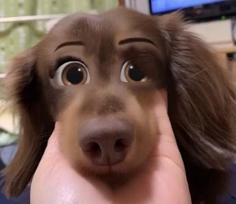 人面犬チャイ
