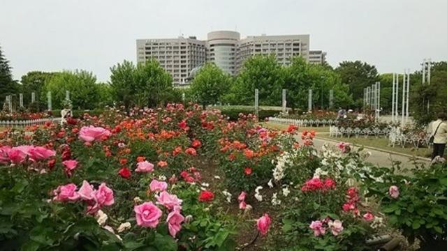 【熊本震災チャリティ企画】バラに癒され元気になって、癒しのエネルギ-を届ける会